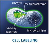 cell labeling chemunex analyzers